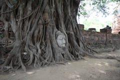 菩萨头的图象Wat的Mahathat 库存照片