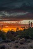 菲尼斯亚利桑那在日落以后的夜场面 库存照片