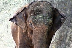 菲尼斯动物园,自然保护亚利桑那中心,菲尼斯,亚利桑那,美国 免版税库存图片