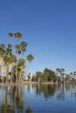 菲尼斯街市如被看见从Encanto Park湖, AZ 库存图片