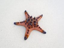 菲律宾海滩星 免版税库存图片