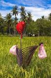 菲律宾稻草人 免版税库存照片