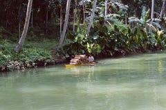 菲律宾:在保和省附近的河巡航 库存图片
