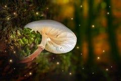 萤火虫和发光的蘑菇特写镜头在一个黑暗的森林里 免版税库存图片