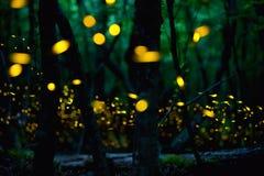 萤火虫在布尔加斯市,保加利亚附近的夏天 免版税库存照片