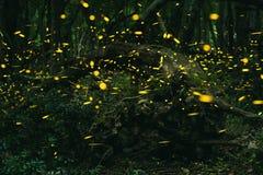 萤火虫在森林的夏天 免版税库存照片