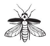 萤火虫昆虫黑色墨似的图画 免版税库存图片
