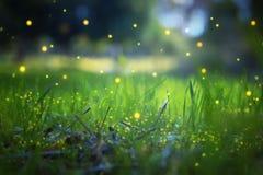 萤火虫飞行的抽象和不可思议的图象在夜森林童话概念的 免版税图库摄影