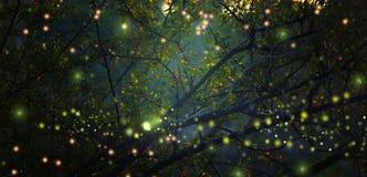 萤火虫飞行的抽象和不可思议的图象在夜森林童话概念的 库存图片