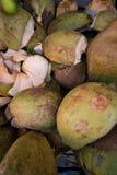 营养产业的椰子 库存照片