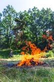 营火惊人的火焰在森林附近的 免版税图库摄影