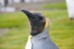 萨利平原的企鹅国王 免版税库存照片