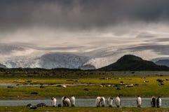 萨利平原的企鹅国王 图库摄影
