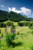 萨尔巴赫Hinterglemm,奥地利 免版税库存照片