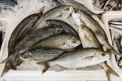 萨帕樽海鞘待售在希腊鱼市上 库存图片