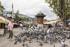 萨拉热窝,波黑, 2017年7月16日:妇女喂养鸽子 免版税库存图片