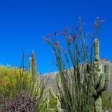 萨格鲁国家公园 免版税库存照片
