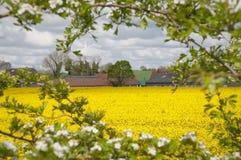 萨福克农场在春天 免版税图库摄影