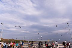 萨穆特Prakan,泰国- 11月11,2017 :飞行在海的观点的人和海鸥在Bangpu萨穆特Prakan,泰国 免版税库存照片