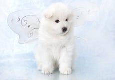 萨莫耶特人小狗 库存照片