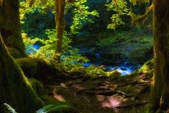 萨蒙河Mt 敞篷国家森林 库存照片