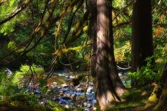 萨蒙河Mt 敞篷国家森林 免版税库存图片