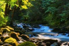 萨蒙河Mt 敞篷国家森林 免版税库存照片