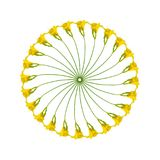 萱草属植物花的圆样式 皇族释放例证