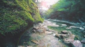 落下在茂盛植物的水在山河慢动作附近 影视素材