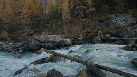 落下浅小河的浪端的白色泡沫流动在灰色岩石之间在西伯利亚山高地 影视素材