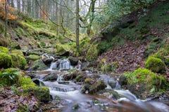 落下的瀑布在平安的遥远的森林地森林里 免版税库存图片
