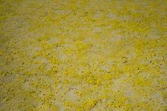 落从在地面上的树的花的图象 免版税库存照片