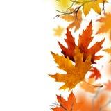 落从空气的干燥秋叶 免版税库存照片