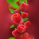 落从空气的莓和叶子 库存照片