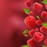 落从空气的莓和叶子 免版税库存照片