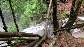 落入山河在大瀑布顶部的树 影视素材