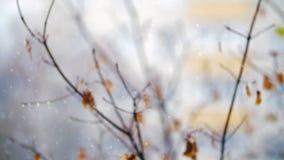 落反对退色的秋天树的雪 股票视频