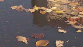 落叶在水坑水在秋天有一点移动 股票视频
