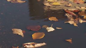 落叶在雨水慢慢地漂浮并且移动  股票视频