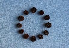 落叶松属十二个锥体圆的框架在蓝色背景的 图库摄影