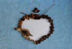 落叶松属锥体、橡子和干燥棍子心脏框架  免版税库存照片