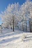 落叶林雪结构树 库存照片