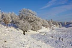 落叶林霜结构树 免版税库存图片