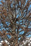 落叶树冠  库存图片