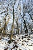 落叶树在冬天 免版税库存照片
