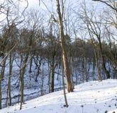 落叶树在冬天 免版税库存图片
