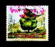 落叶树,树serie的星期,大约1965年 免版税库存图片