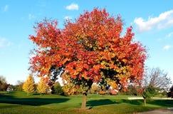 落叶树,生动的颜色 免版税库存图片