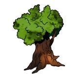 落叶的结构树- 库存照片