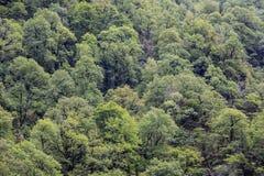落叶绿色树在山腰的森林里 库存照片